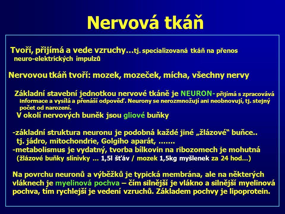 Nervová tkáň Nervovou tkáň tvoří: mozek, mozeček, mícha, všechny nervy