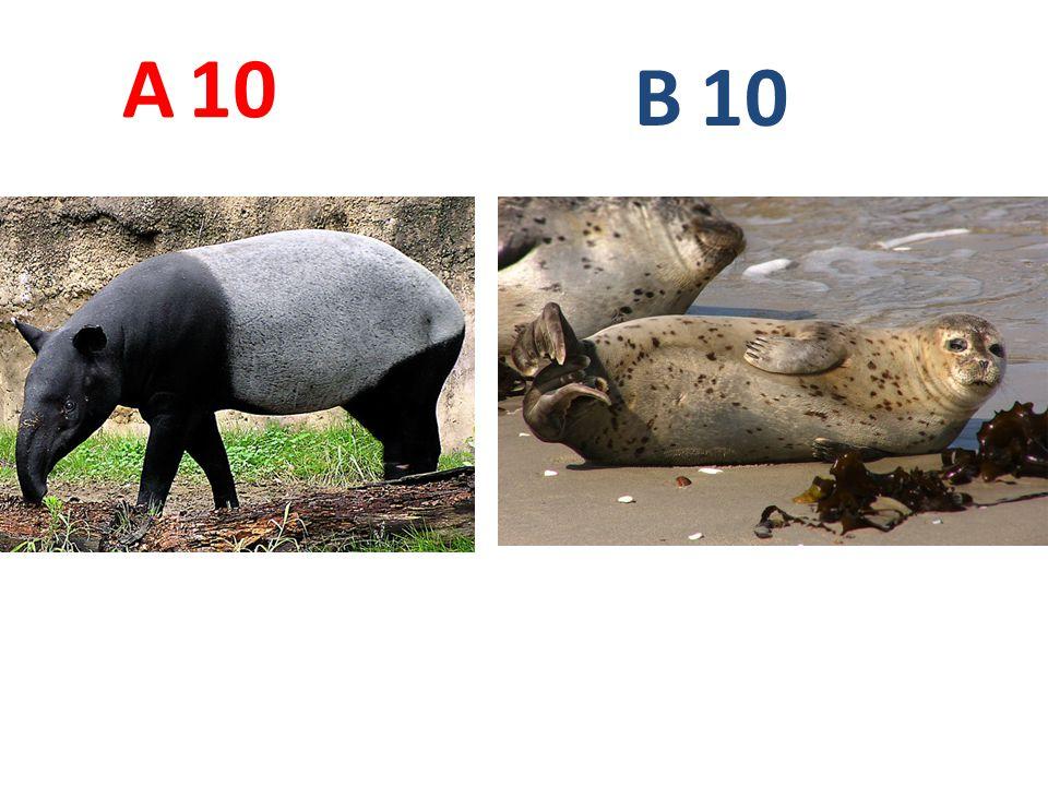 A 10. B. 10. A10: tapír čabrakový http://blogs.up.ac.za/weblog/media/Malayan%20Tapir(1).jpg.