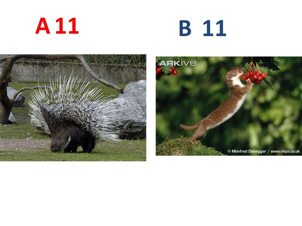 A 11 B 11