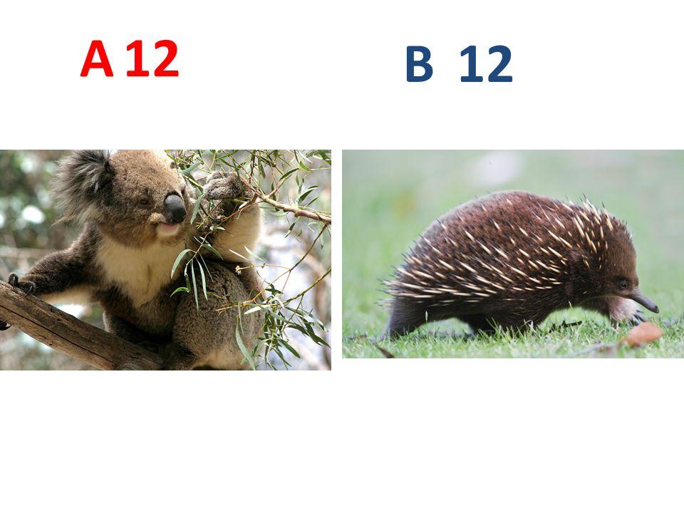 A 12 B 12