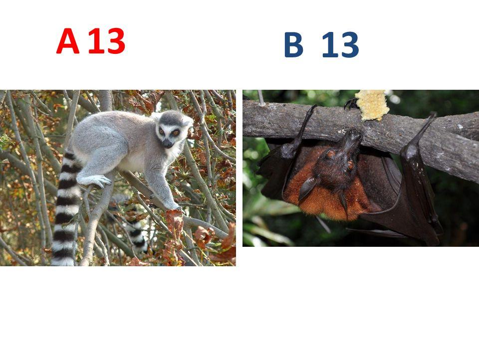 A 13 B 13
