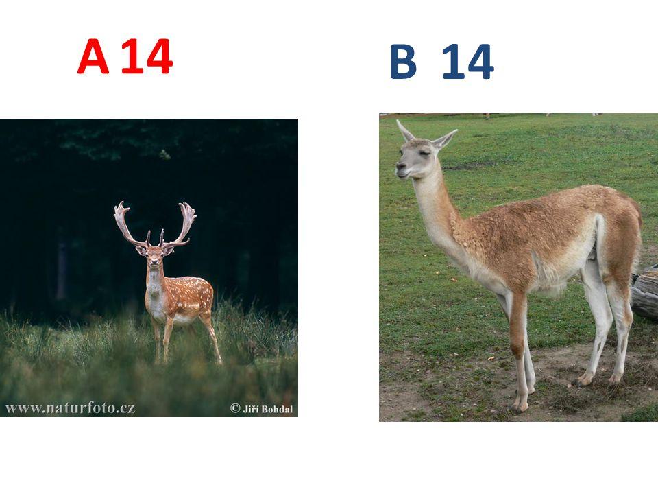 A 14 B 14