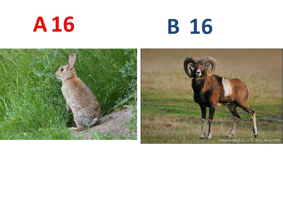 A 16 B 16