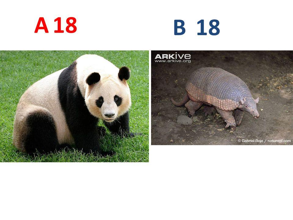 A 18 B 18