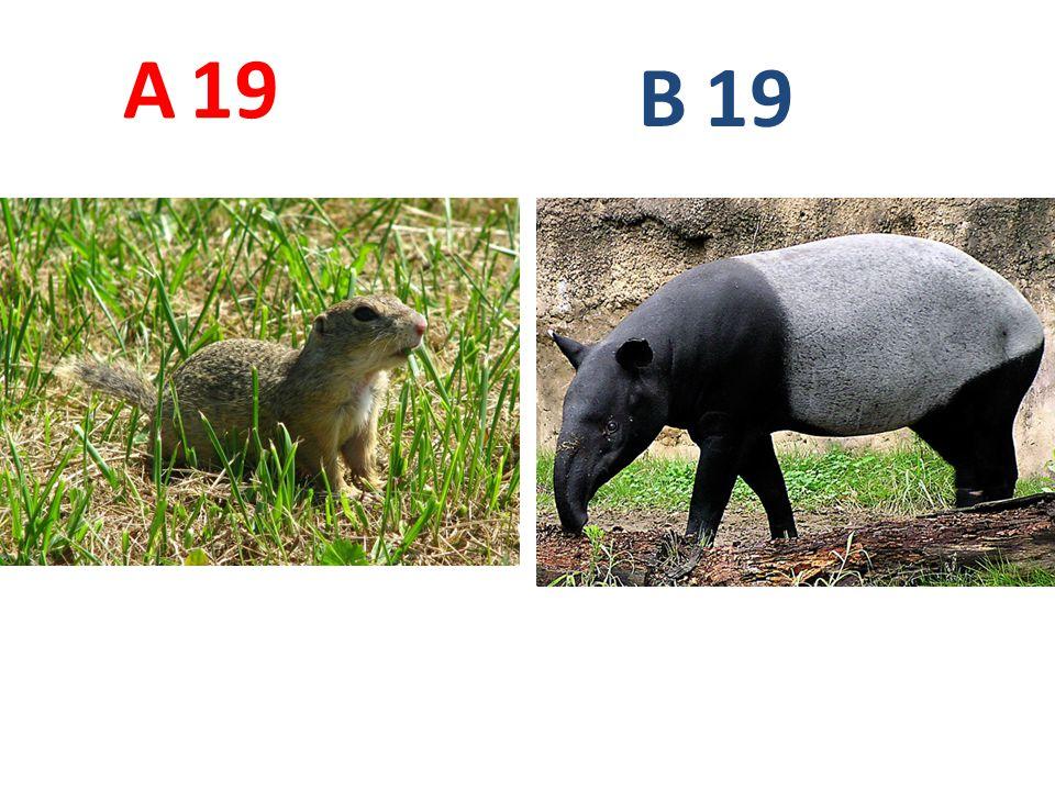 A 19 B 19