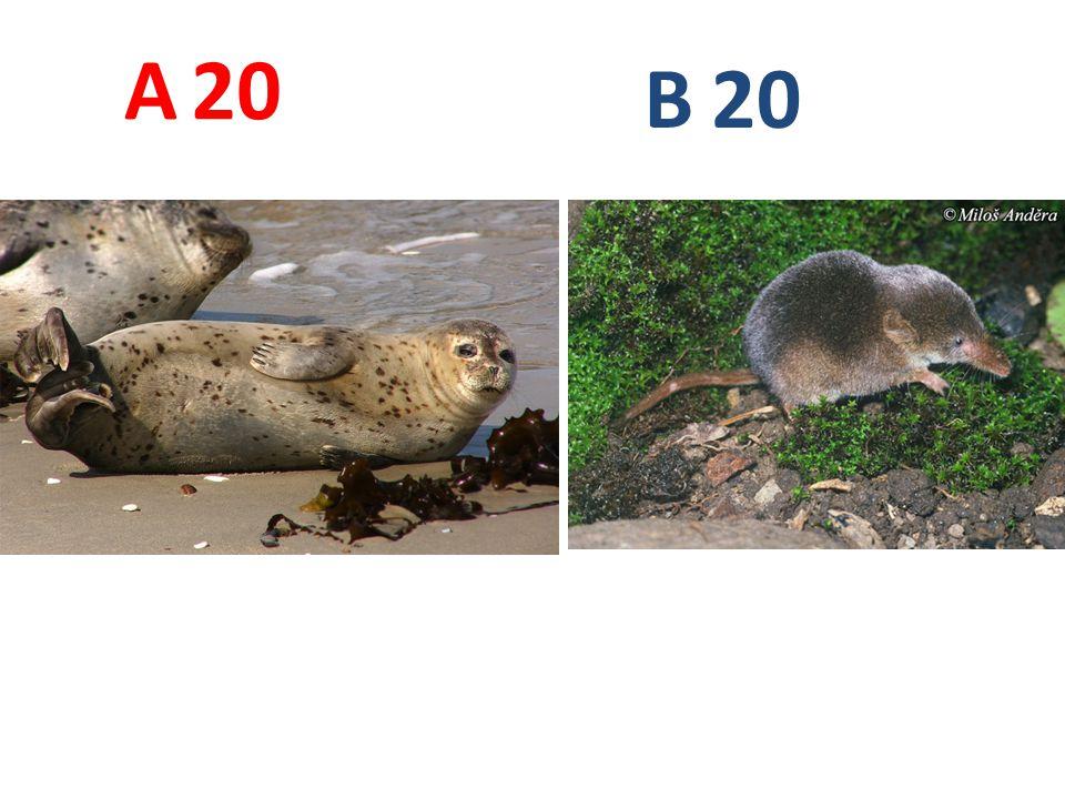 A 20 B 20