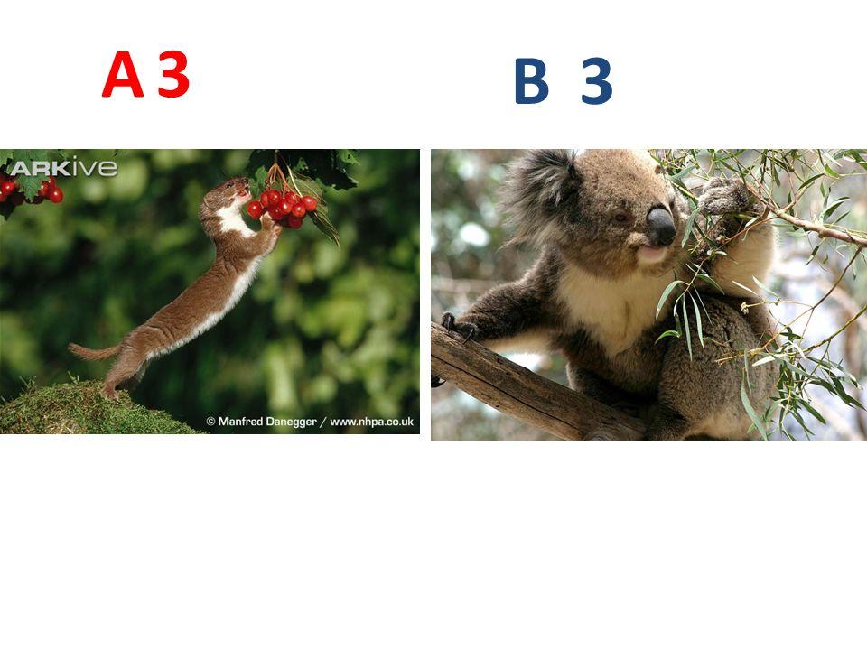 A 3. B. 3.
