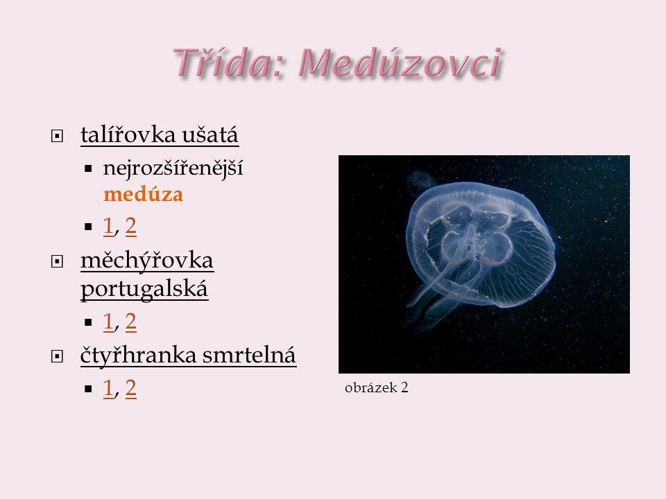 Třída: Medúzovci talířovka ušatá měchýřovka portugalská