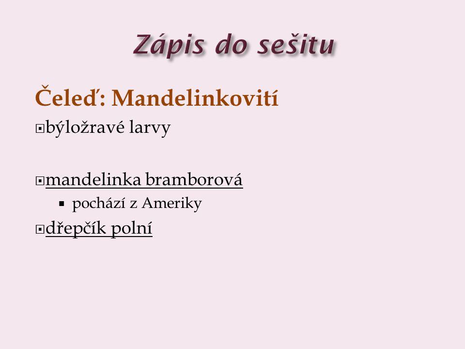 Zápis do sešitu Čeleď: Mandelinkovití býložravé larvy