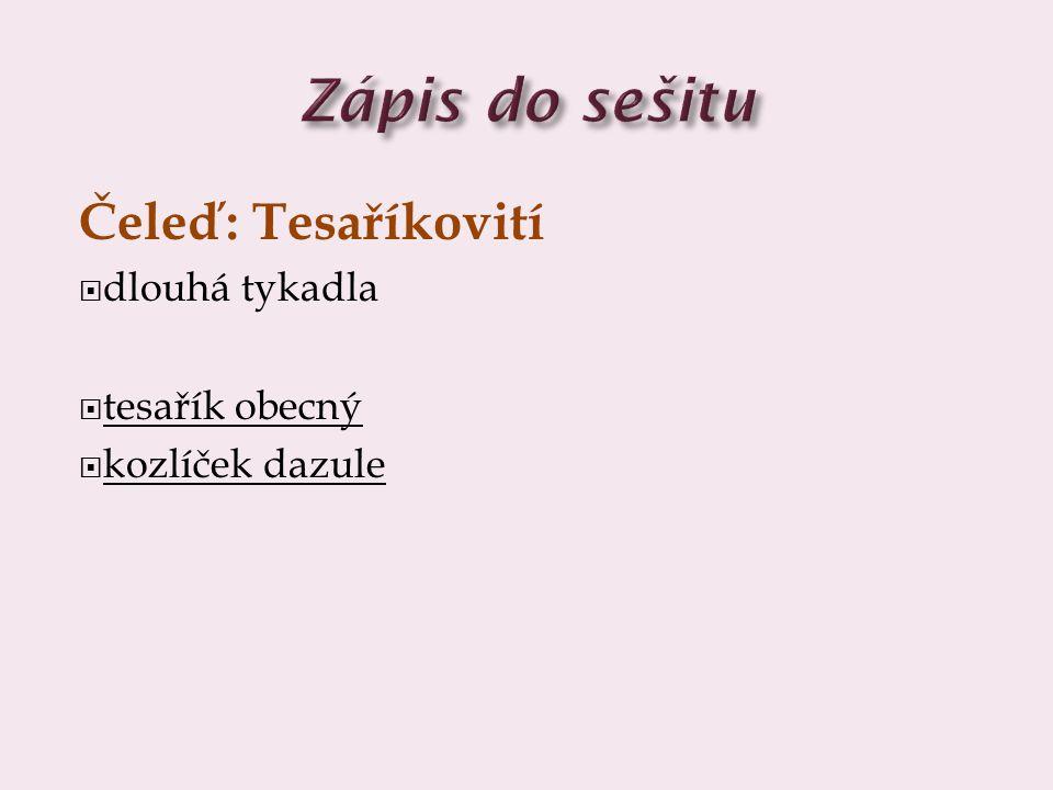 Zápis do sešitu Čeleď: Tesaříkovití dlouhá tykadla tesařík obecný