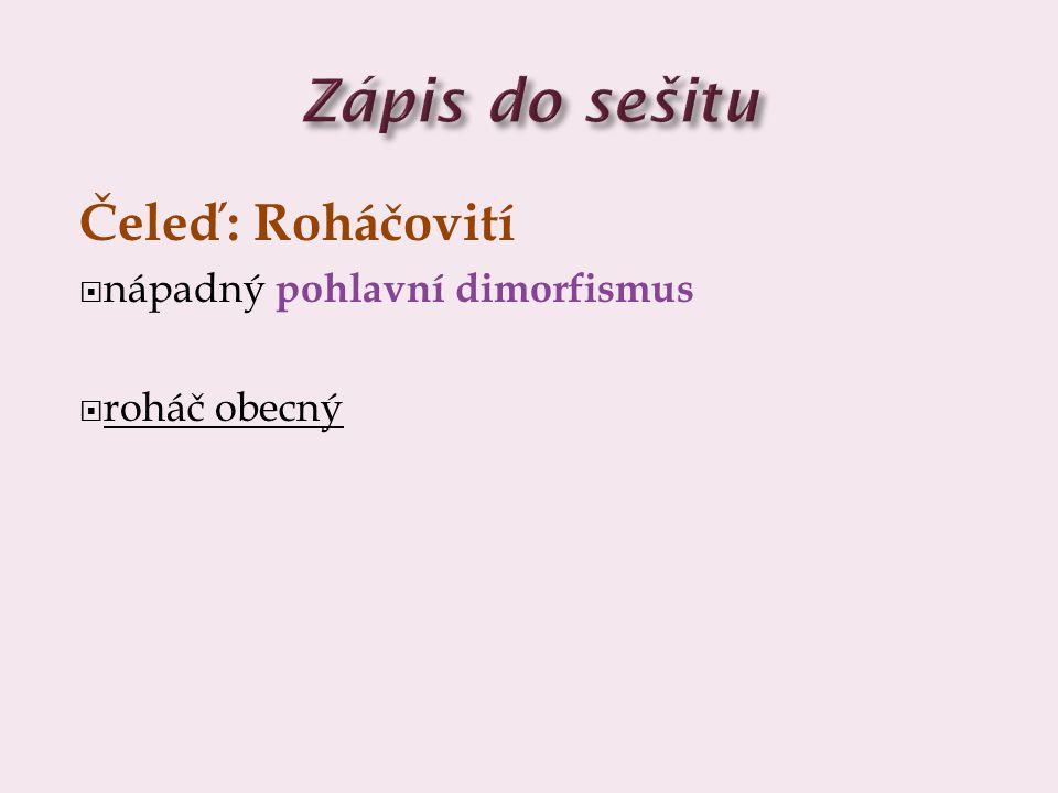 Zápis do sešitu Čeleď: Roháčovití nápadný pohlavní dimorfismus