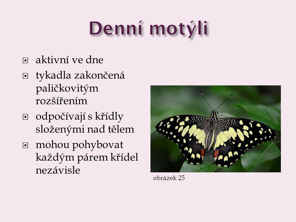 Denní motýli aktivní ve dne tykadla zakončená paličkovitým rozšířením