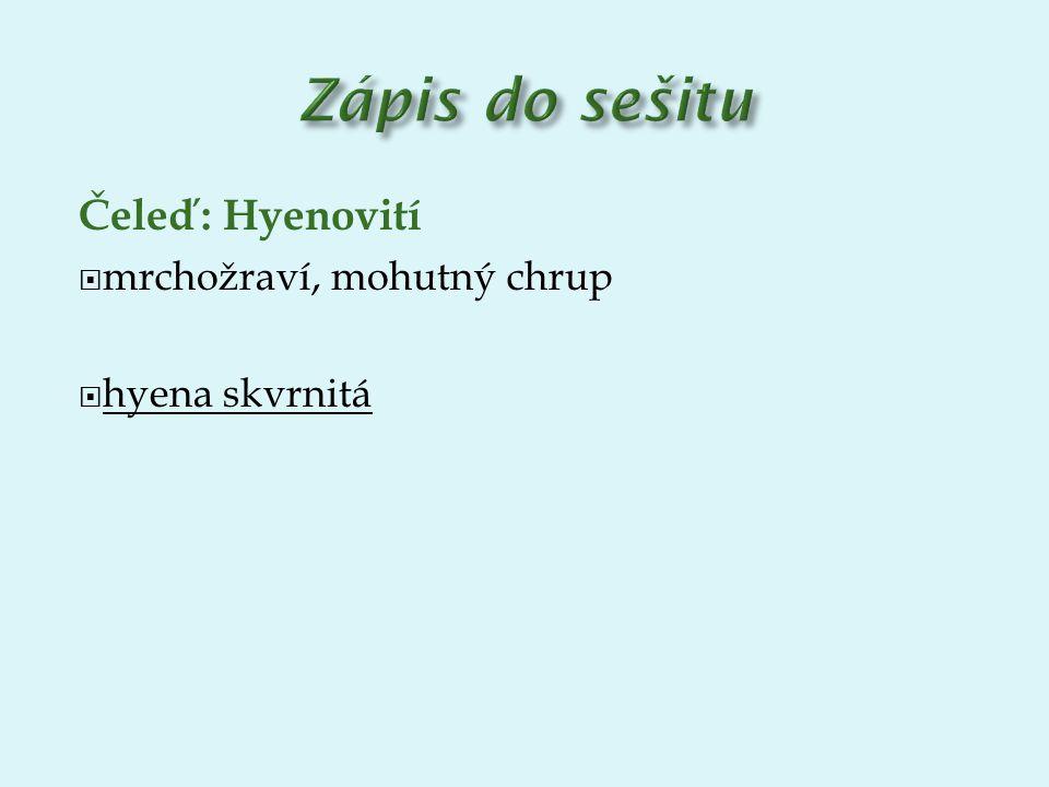 Zápis do sešitu Čeleď: Hyenovití mrchožraví, mohutný chrup
