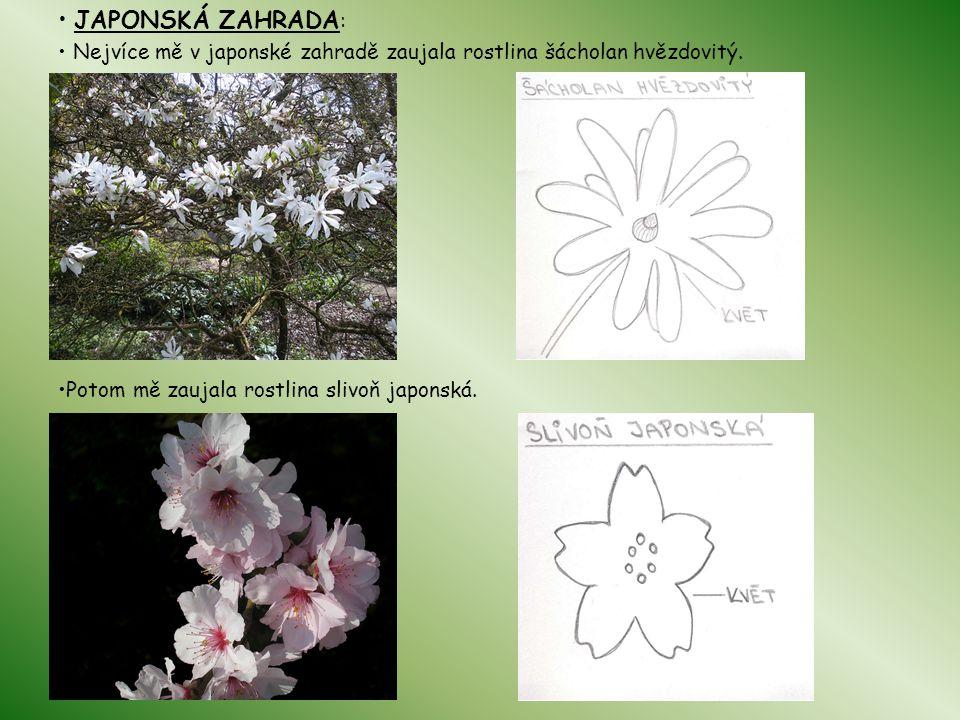 • JAPONSKÁ ZAHRADA: • Nejvíce mě v japonské zahradě zaujala rostlina šácholan hvězdovitý.