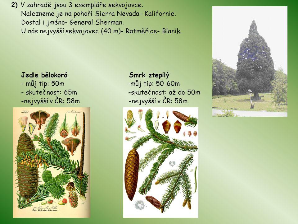 2) V zahradě jsou 3 exempláře sekvojovce.