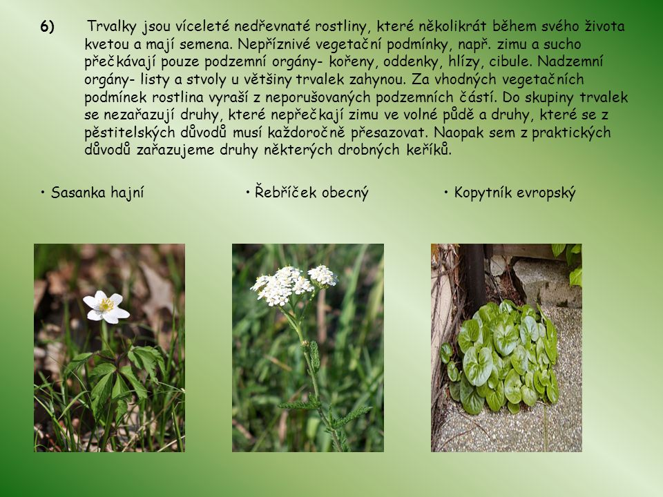 6) Trvalky jsou víceleté nedřevnaté rostliny, které několikrát během svého života kvetou a mají semena. Nepříznivé vegetační podmínky, např. zimu a sucho přečkávají pouze podzemní orgány- kořeny, oddenky, hlízy, cibule. Nadzemní orgány- listy a stvoly u většiny trvalek zahynou. Za vhodných vegetačních podmínek rostlina vyraší z neporušovaných podzemních částí. Do skupiny trvalek se nezařazují druhy, které nepřečkají zimu ve volné půdě a druhy, které se z pěstitelských důvodů musí každoročně přesazovat. Naopak sem z praktických důvodů zařazujeme druhy některých drobných keříků.