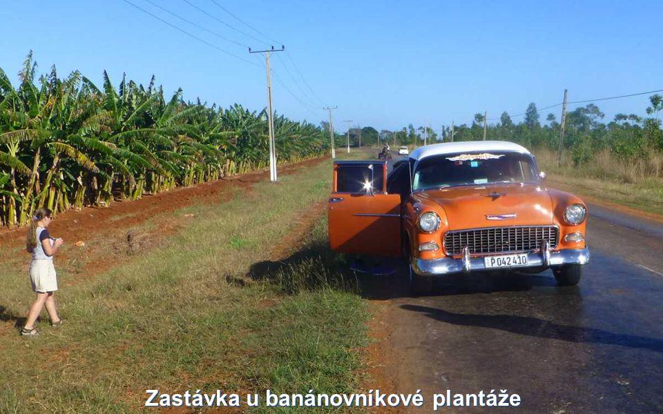 Zastávka u banánovníkové plantáže