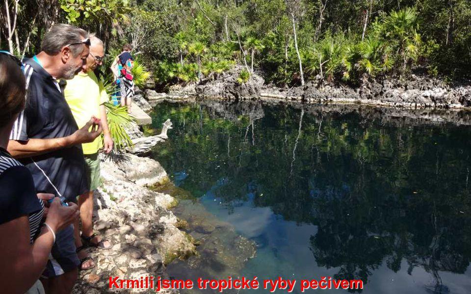 Krmili jsme tropické ryby pečivem