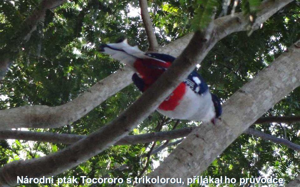 Národní pták Tocororo s trikolorou, přilákal ho průvodce