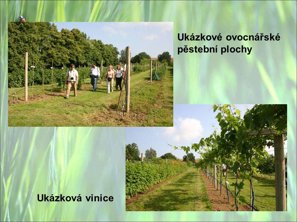 Ukázkové ovocnářské pěstební plochy