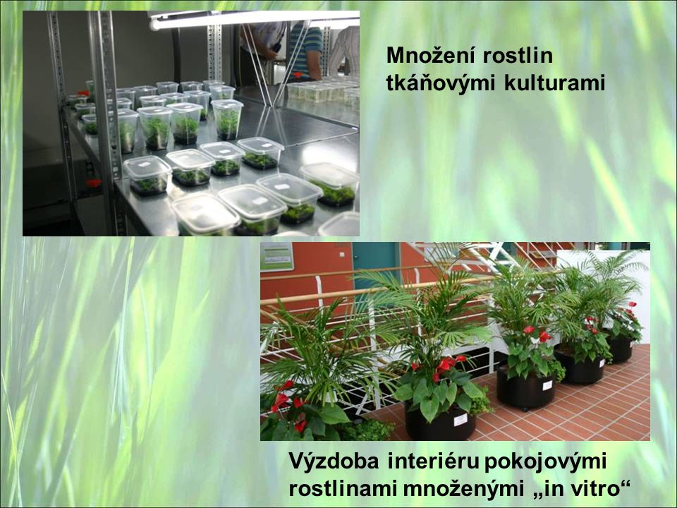 Množení rostlin tkáňovými kulturami