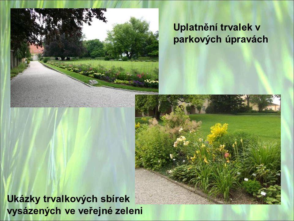 Uplatnění trvalek v parkových úpravách