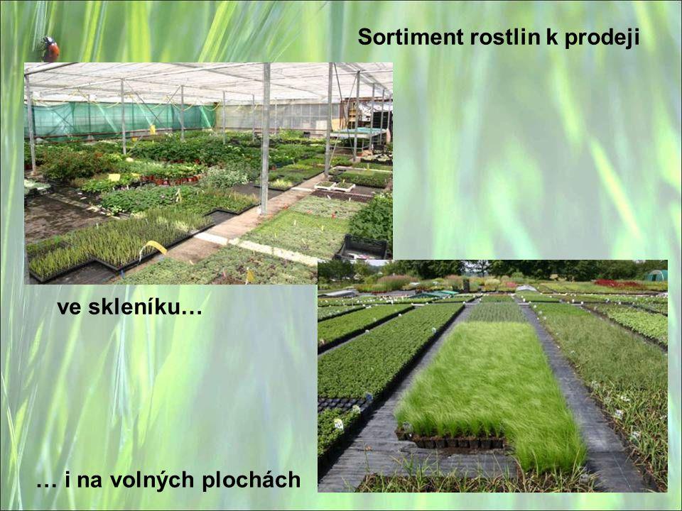 Sortiment rostlin k prodeji
