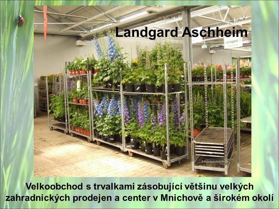 Landgard Aschheim Velkoobchod s trvalkami zásobující většinu velkých zahradnických prodejen a center v Mnichově a širokém okolí.