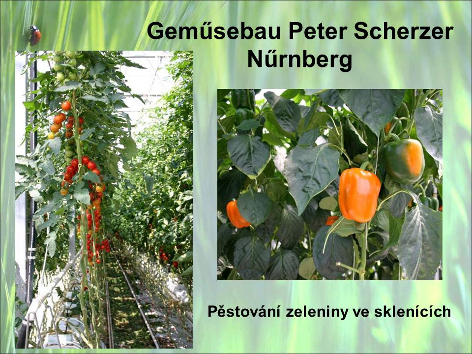 Geműsebau Peter Scherzer Nűrnberg
