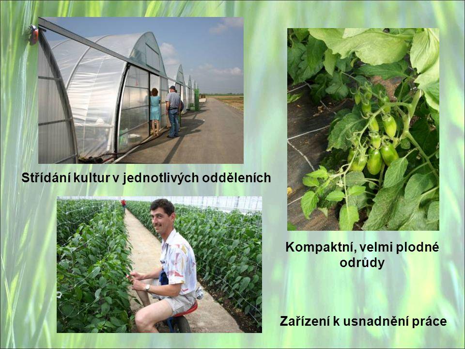 Kompaktní, velmi plodné odrůdy