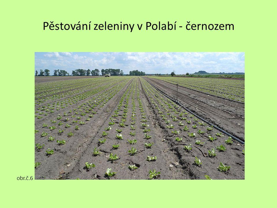 Pěstování zeleniny v Polabí - černozem