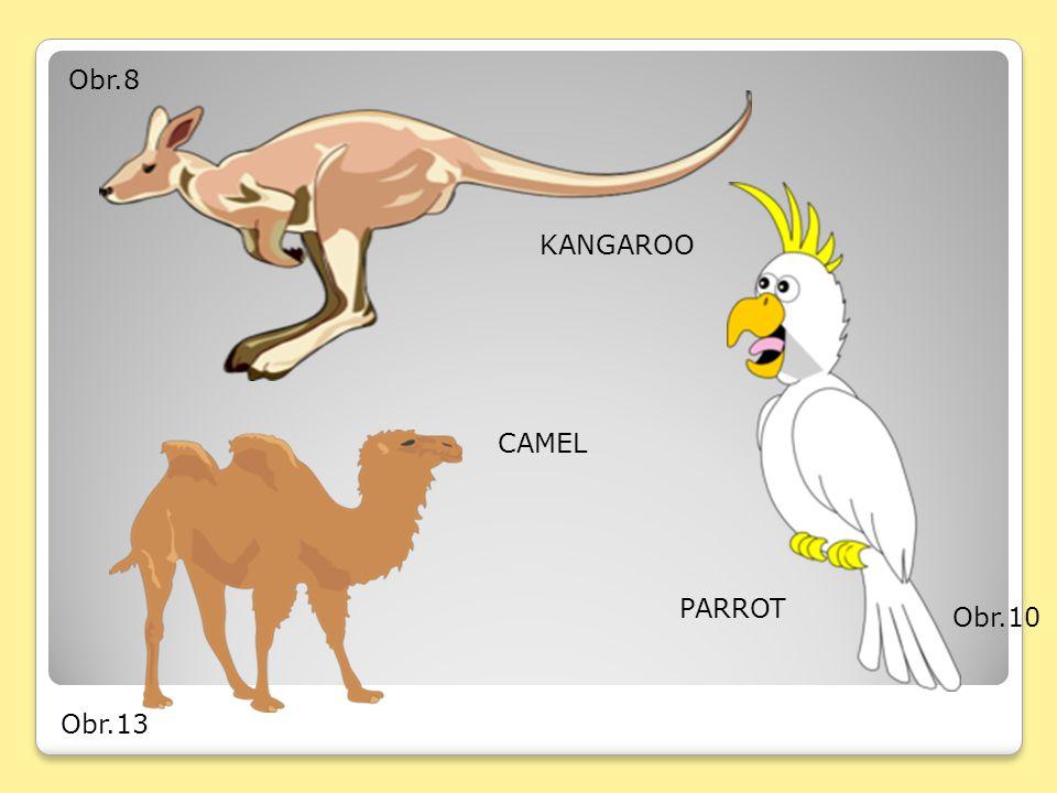 Obr.8 KANGAROO CAMEL PARROT Obr.10 Obr.13