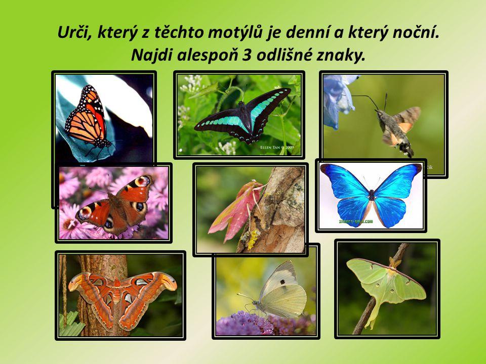 Urči, který z těchto motýlů je denní a který noční.