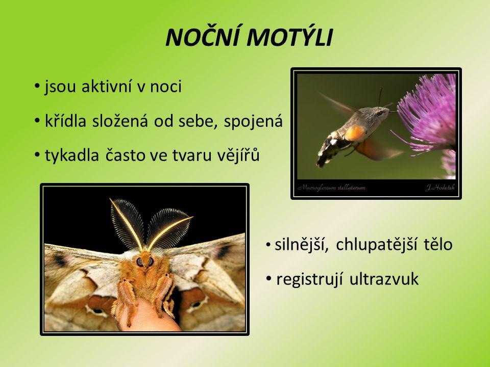 NOČNÍ MOTÝLI jsou aktivní v noci křídla složená od sebe, spojená