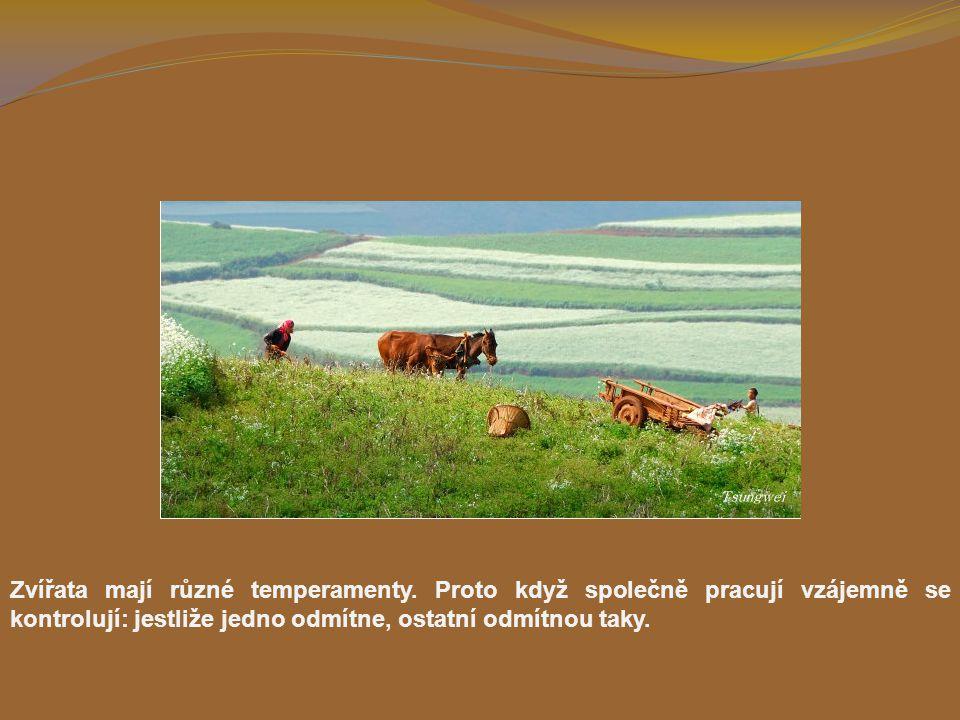 Zvířata mají různé temperamenty