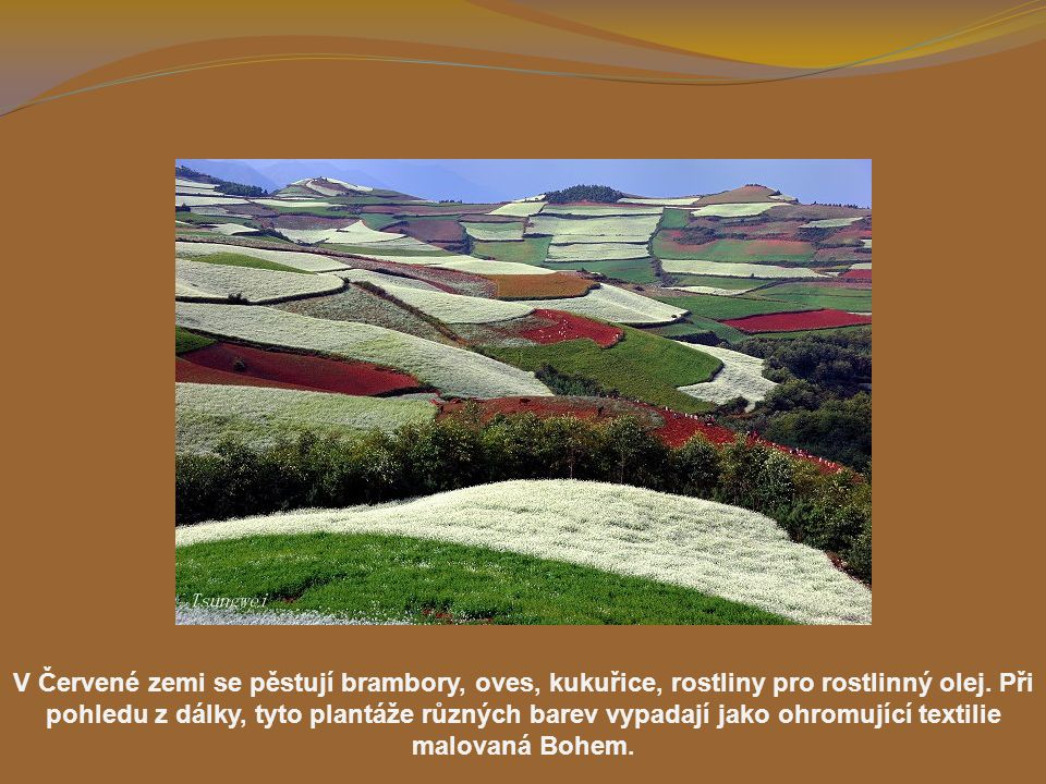 V Červené zemi se pěstují brambory, oves, kukuřice, rostliny pro rostlinný olej.