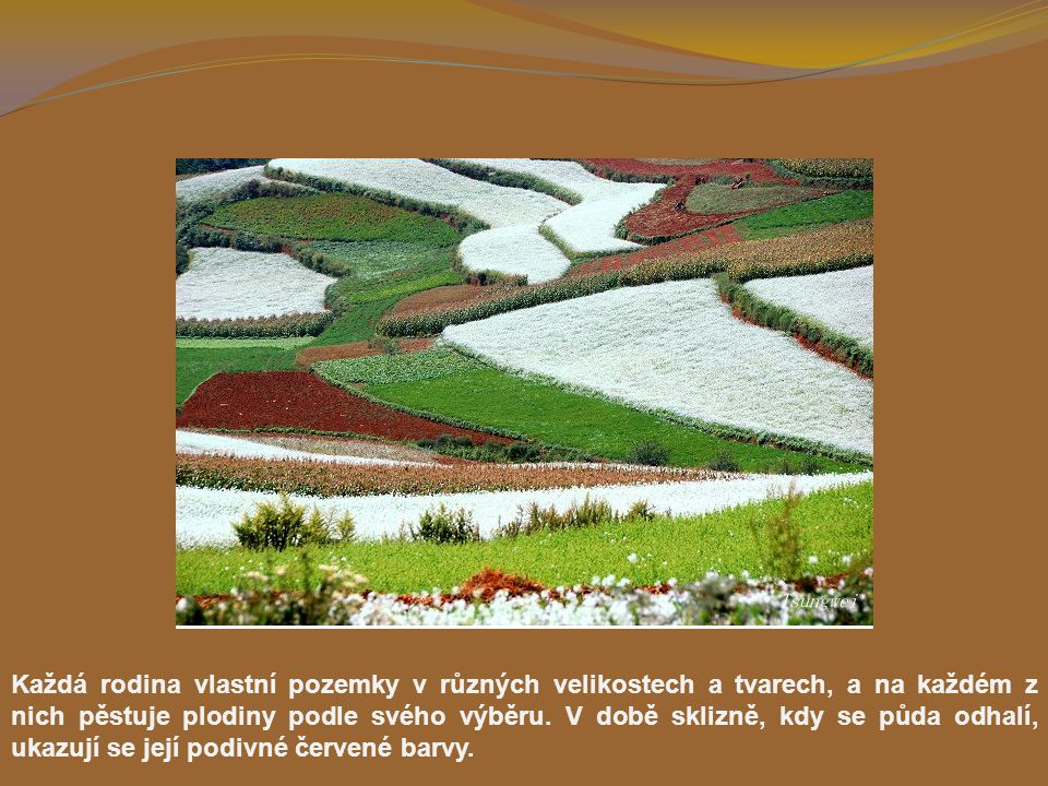 Každá rodina vlastní pozemky v různých velikostech a tvarech, a na každém z nich pěstuje plodiny podle svého výběru.