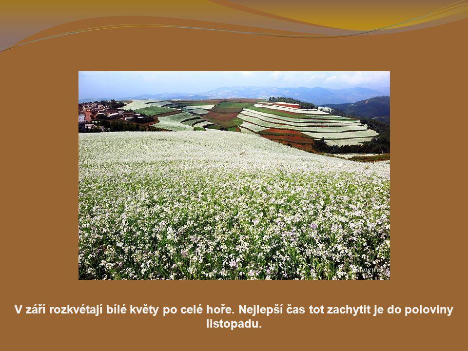 V září rozkvétají bílé květy po celé hoře
