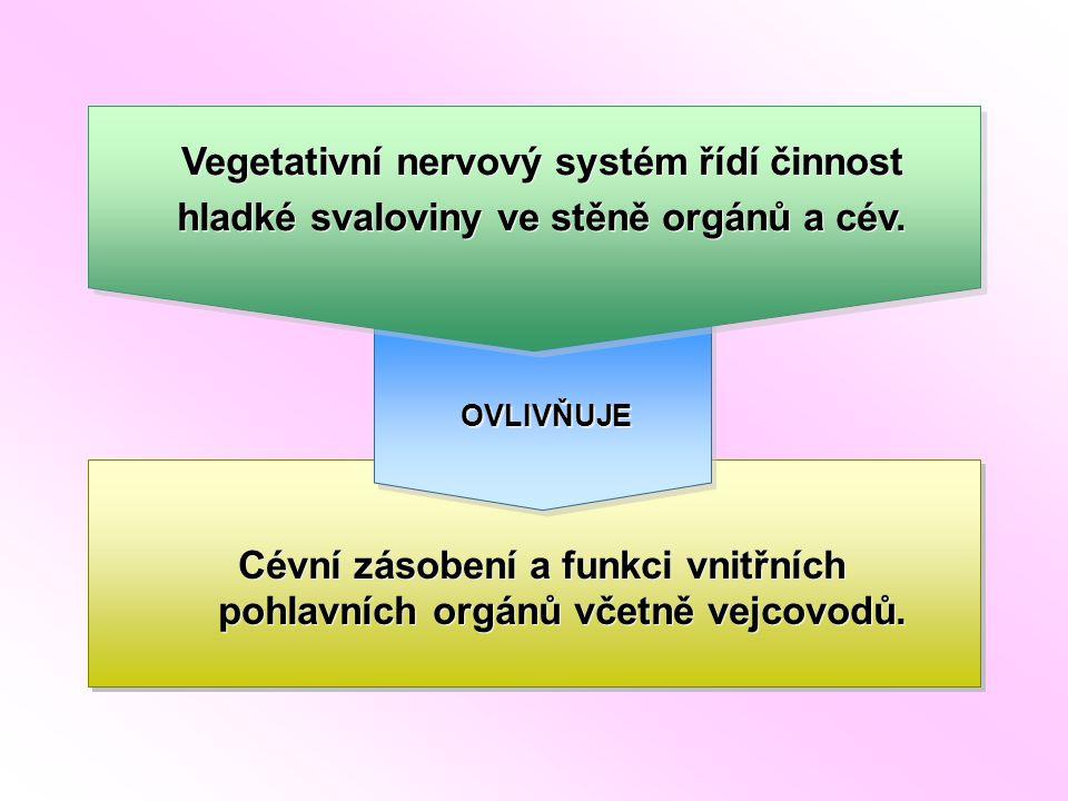 Vegetativní nervový systém řídí činnost