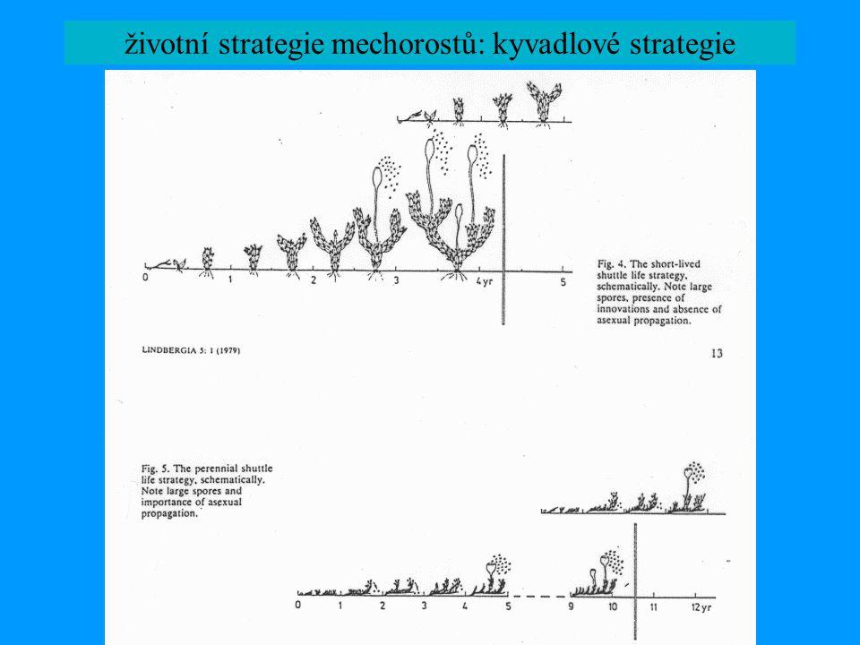 životní strategie mechorostů: kyvadlové strategie