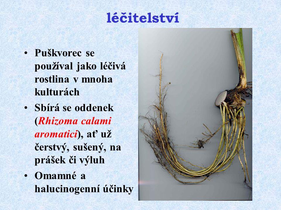 léčitelství Puškvorec se používal jako léčivá rostlina v mnoha kulturách.