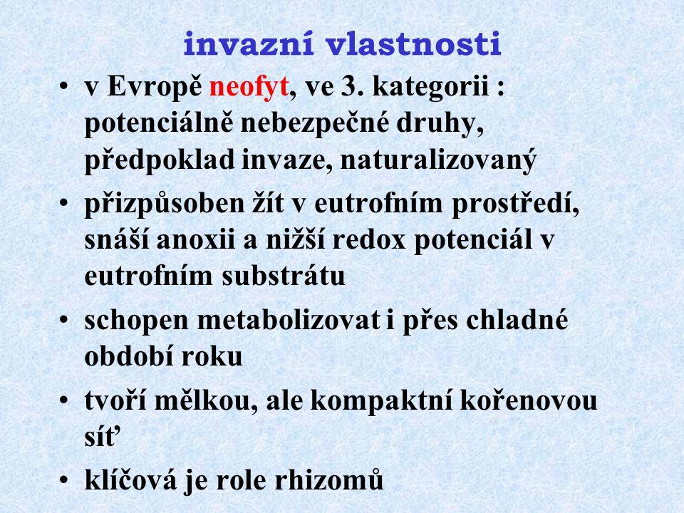 invazní vlastnosti v Evropě neofyt, ve 3. kategorii : potenciálně nebezpečné druhy, předpoklad invaze, naturalizovaný.