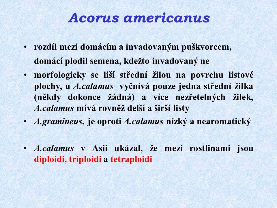 Acorus americanus rozdíl mezi domácím a invadovaným puškvorcem, domácí plodil semena, kdežto invadovaný ne.