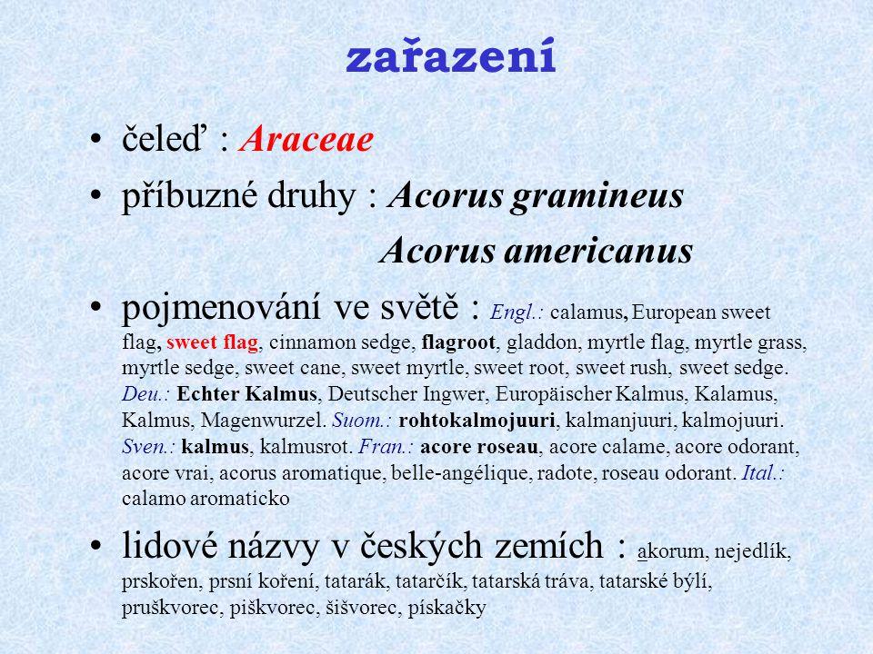 zařazení čeleď : Araceae příbuzné druhy : Acorus gramineus