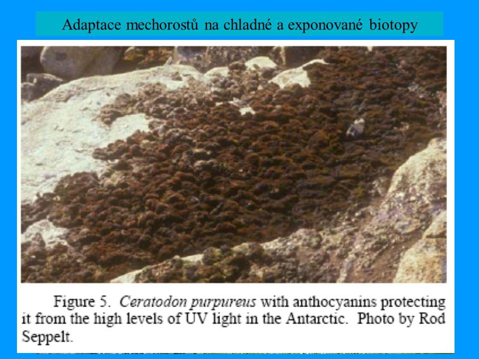Adaptace mechorostů na chladné a exponované biotopy