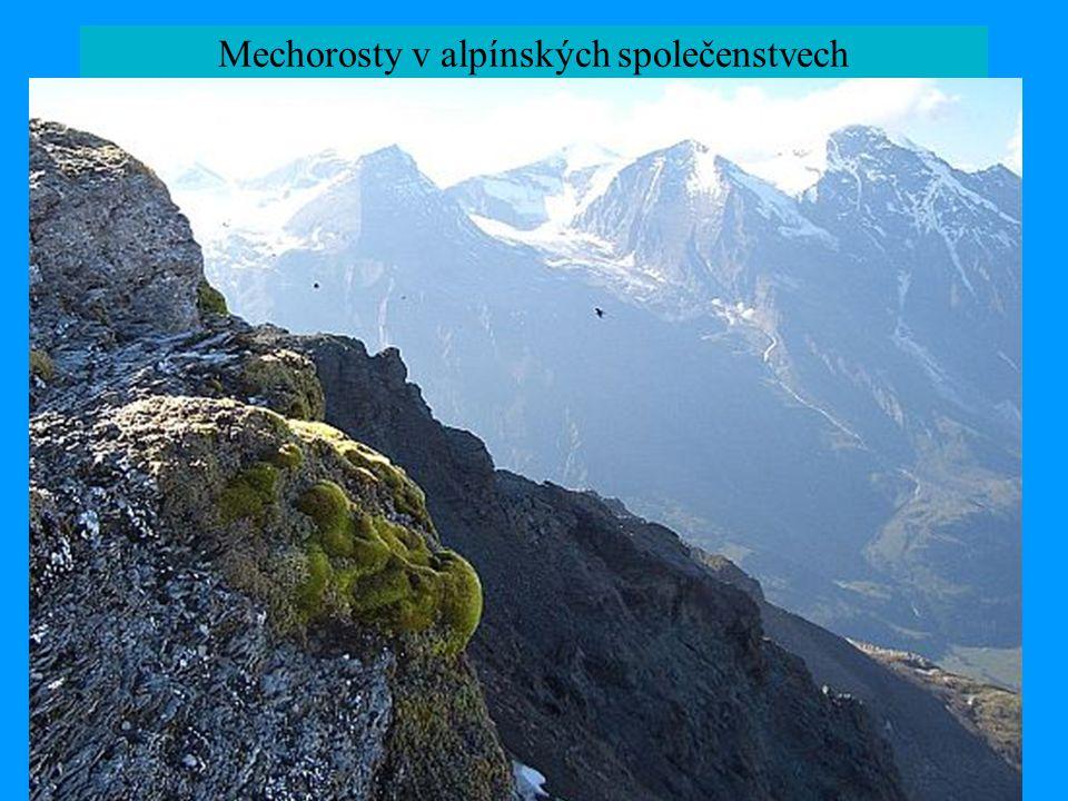Mechorosty v alpínských společenstvech
