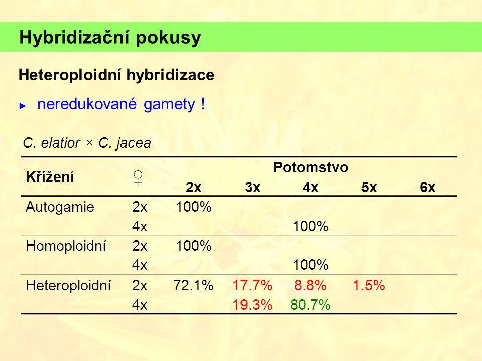 Hybridizační pokusy Heteroploidní hybridizace ♀ neredukované gamety !