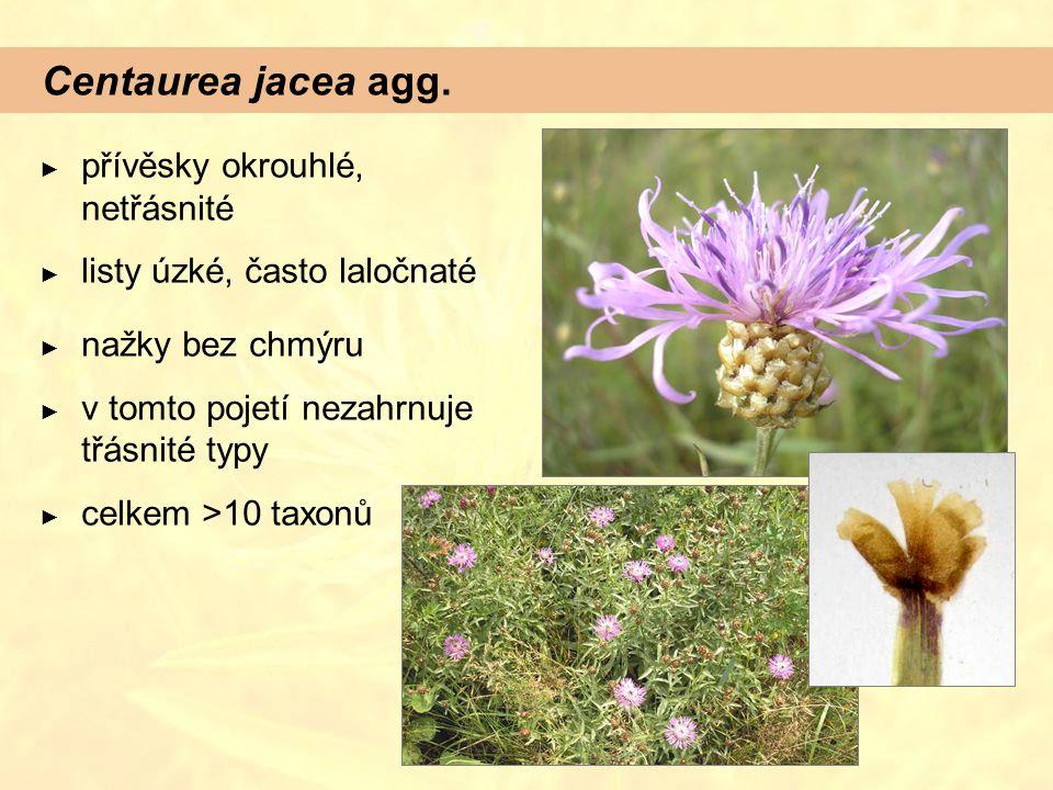 Centaurea jacea agg. přívěsky okrouhlé, netřásnité