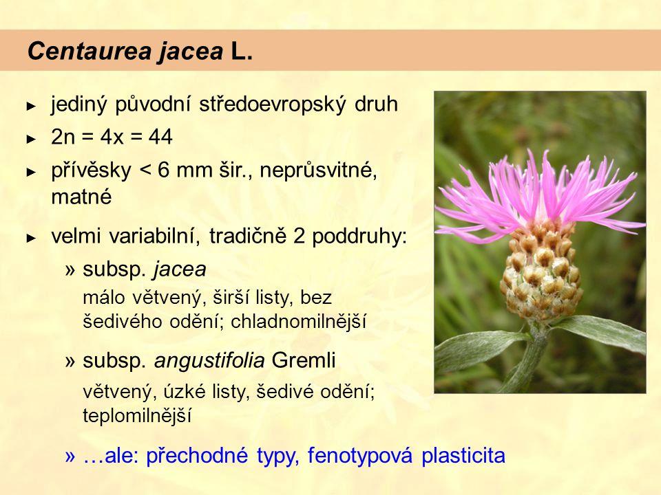 Centaurea jacea L. jediný původní středoevropský druh 2n = 4x = 44