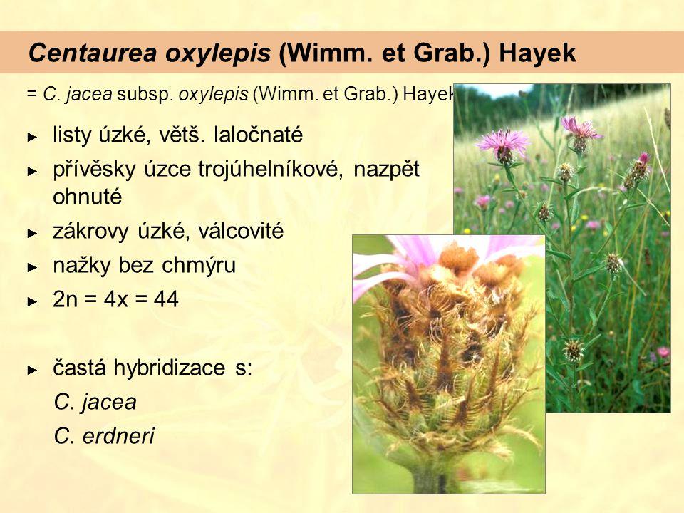 Centaurea oxylepis (Wimm. et Grab.) Hayek
